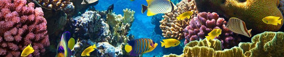 Egitto & Sharm el Sheikh